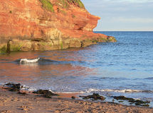 Red sand stone and ocean waves, coastal landscape jurassic coast Stock Images
