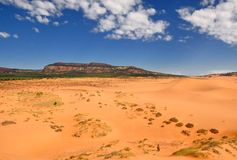 Red sandstone cliffs in Coral pink sand dunes state park. The park is located near Kanab in Utah Royalty Free Stock Image