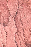 Red sandstone. Royalty Free Stock Photo