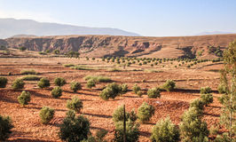Red sandy landscape with green bushes. Typical maroccan landscape near marrakesh Royalty Free Stock Photo