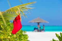 Red Santa Christmas stocking between palm trees on Stock Image