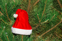 Red Santa Claus hat on fir branch in winter park outdoors Royalty Free Stock Photography