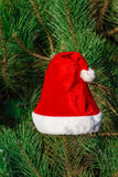 Red Santa Claus hat on fir branch in winter park outdoors Royalty Free Stock Images