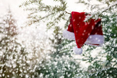 Red Santa hat hanging on a branch in the snow Royalty Free Stock Photo