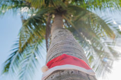 Red Santa`s hat hanging on palm tree at the tropical beach. Christmas in tropical climate concept.  Stock Photography