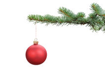Red satin glass ball hanging on christmas branch. Isolated on white Royalty Free Stock Photography