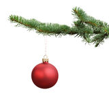 Red satin glass ball hanging on christmas branch. Isolated on white Royalty Free Stock Image