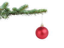 Red satin glass ball hanging on christmas branch Stock Photography