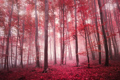 Red saturated mystic autumn season forest Stock Photos