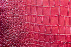 Red scales macro exotic background, embossed under the skin of a reptile, crocodile. Texture genuine leather close-up Stock Image