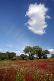 Red scenery. Spring time landscape in Portugal inlands Royalty Free Stock Images