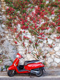 Red scooter, red bougainvillea plant royalty free stock photo