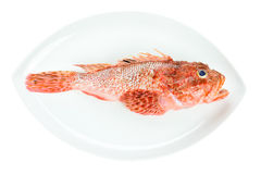 Red Scorpionfish seafood on dish isolated on white Royalty Free Stock Photo