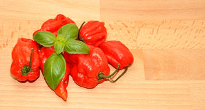 Red Scotch Bonnet Peppers Royalty Free Stock Image