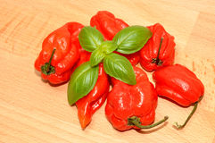 Red Scotch Bonnet Peppers Royalty Free Stock Photos