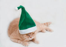 Red scottish fold cat in hat Stock Photography