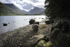 Red Screes Royalty Free Stock Image