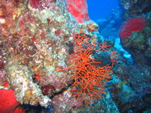 Red sea. Sponges,corals-the reef life Stock Images