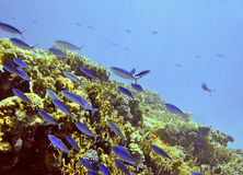 Red Sea. Giftun coral reef, Hurghada coast, Red Sea, Egypt Royalty Free Stock Photo