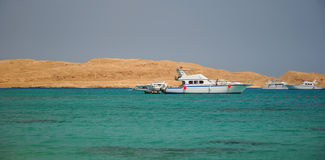 Red Sea royalty free stock images