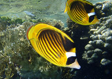 Red sea adventure Royalty Free Stock Image