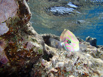 Red sea adventure Stock Image