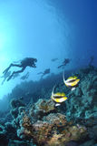 Red Sea bannerfish with scuba divers silhouettes. Royalty Free Stock Image