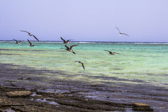 Red Sea beach Red sea Egypt Stock Photography