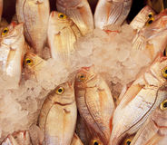Red sea bream in the ice  Royalty Free Stock Images