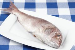 Red sea bream. A red sea bream on a white porcellain plate. The plate is located on a blue-white checkered tablecloth Stock Photos