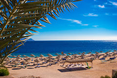 Red sea coast Stock Image