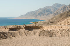 Red Sea coast Stock Photography