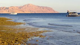 Red sea coast Royalty Free Stock Images