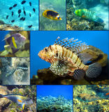 Red Sea coral fish set Stock Photo