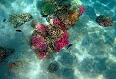Red Sea coral reef Royalty Free Stock Images