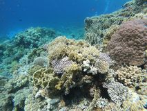 Red Sea Coral Reef. Off Sharm El Sheikh, Egypt stock photography