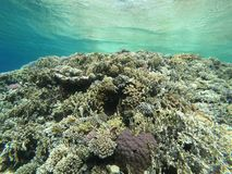 Red Sea Coral Reef. Off Sharm El Sheikh, Egypt royalty free stock images