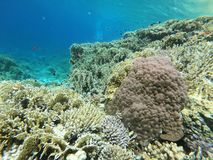 Red Sea Coral Reef. Off Sharm El Sheikh, Egypt royalty free stock photo