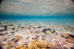 Red sea coral reef. Underwater landscape. Egypt, Sharm, Red sea coral reef and fish. Primiraly scarus fishes Royalty Free Stock Photos
