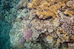 Red sea coral reef. Underwater landscape. Red sea coral reef and fish Royalty Free Stock Images