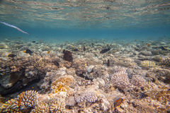 Red sea coral reef Stock Image