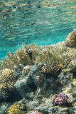 Red sea coral reef. Underwater landscape. Red sea coral reef. Moring clean water, reflection surface Royalty Free Stock Photos