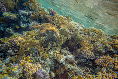 Red sea coral reef. Underwater landscape. Red sea coral reef. Coral wall Royalty Free Stock Photos