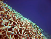 Red sea corals. Different corals and the open sea Stock Photo