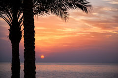 Red sea dawn. Sunrise over the Red Sea with palm trees in silhouette in the foreground Stock Photos
