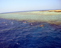 Free Red Sea Diving Stock Photography - 4352062