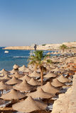 Red sea in Egypt Royalty Free Stock Photography