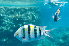 Red sea in Egypt Royalty Free Stock Images