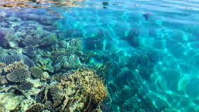 Red sea. Egypt,red sea, fish and coral stock video footage