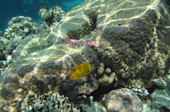 Red sea -4 Stock Photography